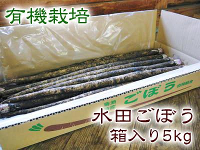 最旬食材!無農薬・無化学肥料栽培で育てた熊本県菊池市産の「有機栽培の水田ごぼう」早い者勝ちです!_a0254656_16525691.jpg