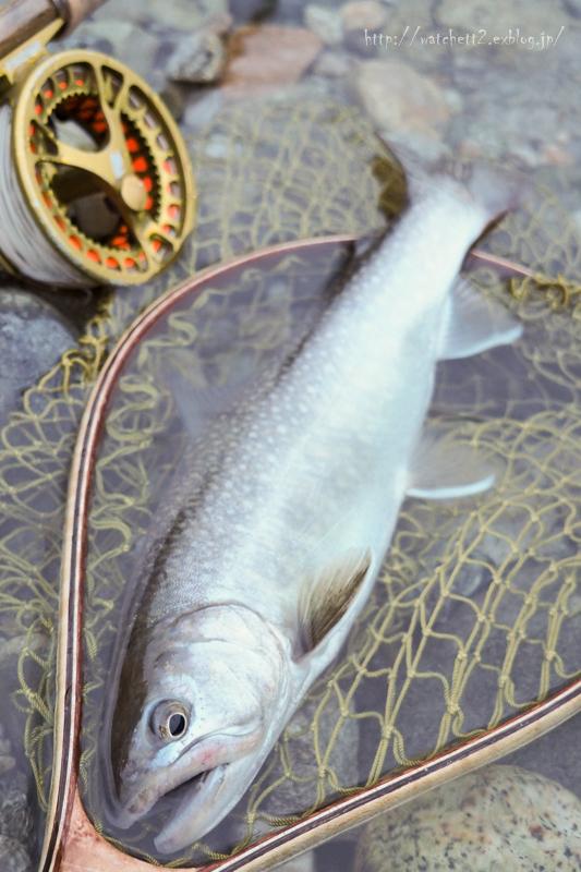 半分近くは釣り場で過ごしておりました‥_e0136764_20074201.jpg