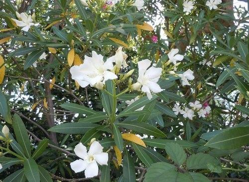 路傍の花、樹々の鳥(347) ~ 初夏のイメージ ~_b0102572_10034055.jpg