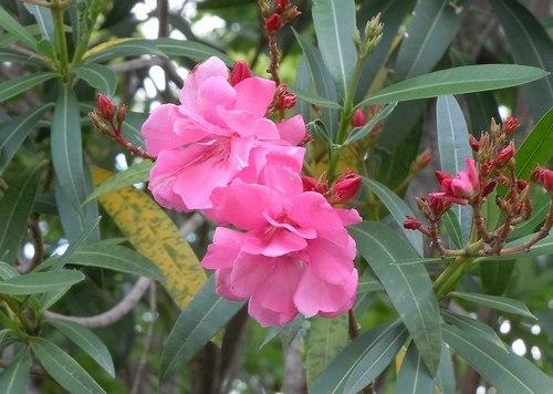 路傍の花、樹々の鳥(347) ~ 初夏のイメージ ~_b0102572_10035982.jpg