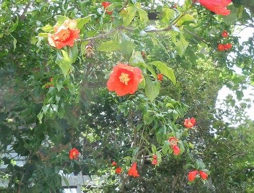 路傍の花、樹々の鳥(347) ~ 初夏のイメージ ~_b0102572_10043666.jpg