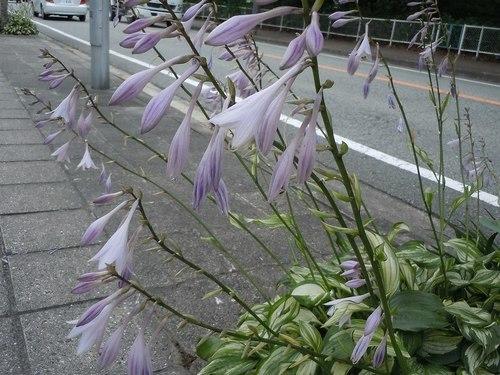 路傍の花、樹々の鳥(347) ~ 初夏のイメージ ~_b0102572_10050171.jpg