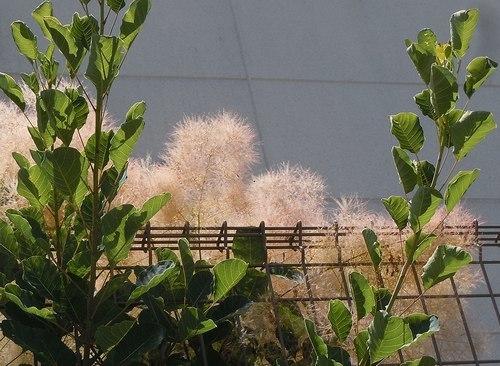 路傍の花、樹々の鳥(347) ~ 初夏のイメージ ~_b0102572_10052670.jpg