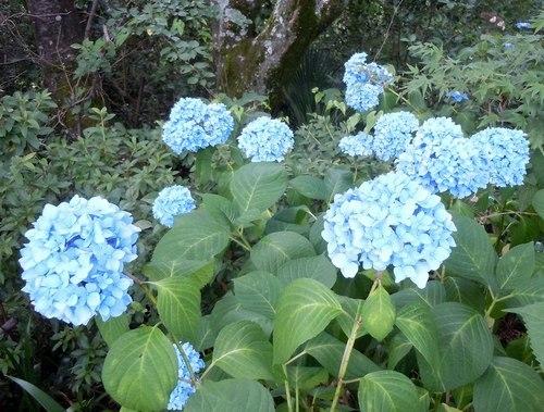路傍の花、樹々の鳥(347) ~ 初夏のイメージ ~_b0102572_10213208.jpg