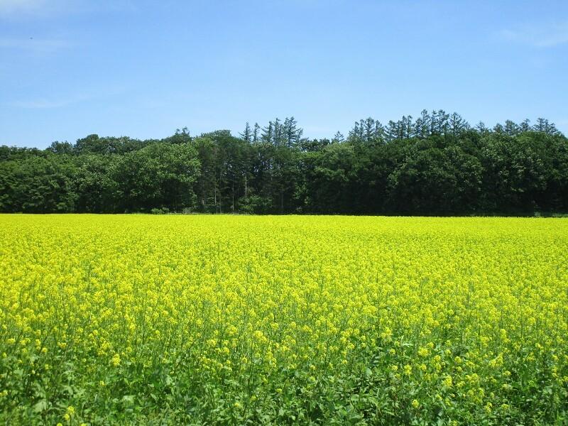 北海道again 8日目【屈足−帯広】十勝晴れで 暑かった_e0201281_19151114.jpg