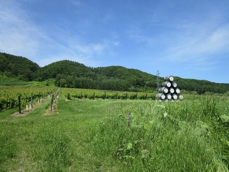 北海道again 8日目【屈足−帯広】十勝晴れで 暑かった_e0201281_19194203.jpg