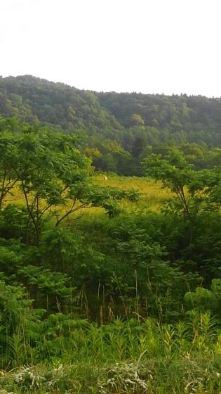 北海道2_b0393191_14490703.jpg