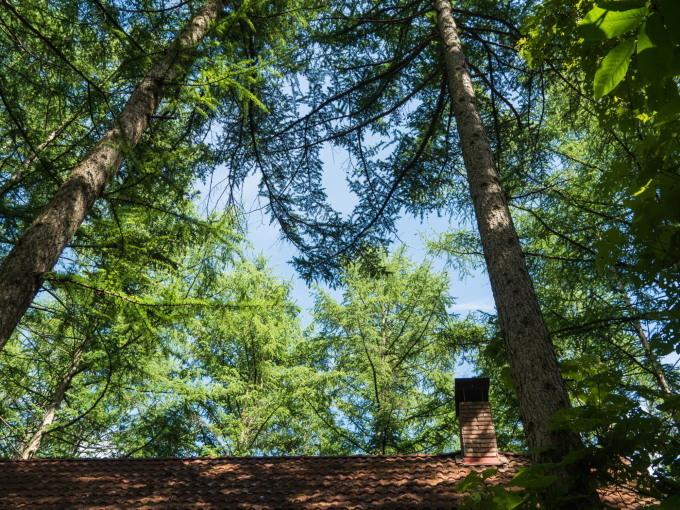 さわやかな6月・・カンタベリーの森のひとコマ。_f0276498_10151853.jpg