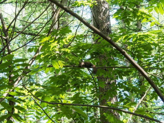 さわやかな6月・・カンタベリーの森のひとコマ。_f0276498_10155185.jpg