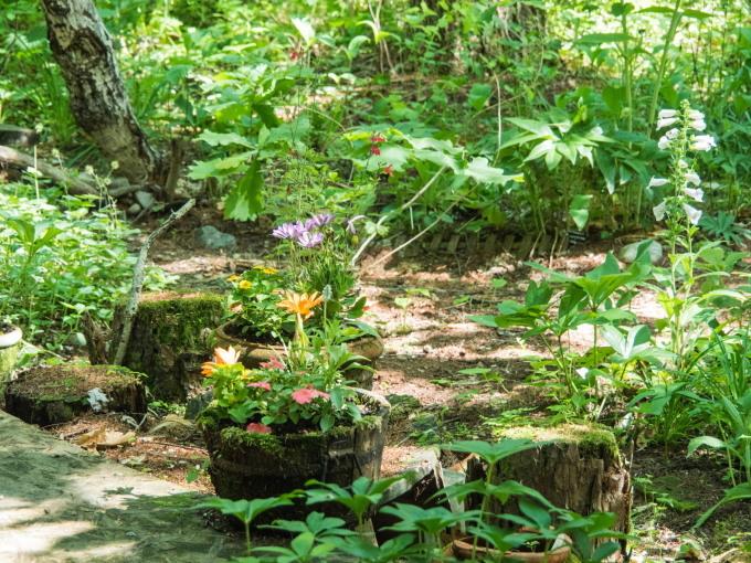 さわやかな6月・・カンタベリーの森のひとコマ。_f0276498_10172624.jpg