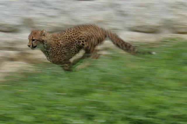 ネコ好きにはたまりません。五つ子たちの、RUN&JUMP_b0291402_05280108.jpg