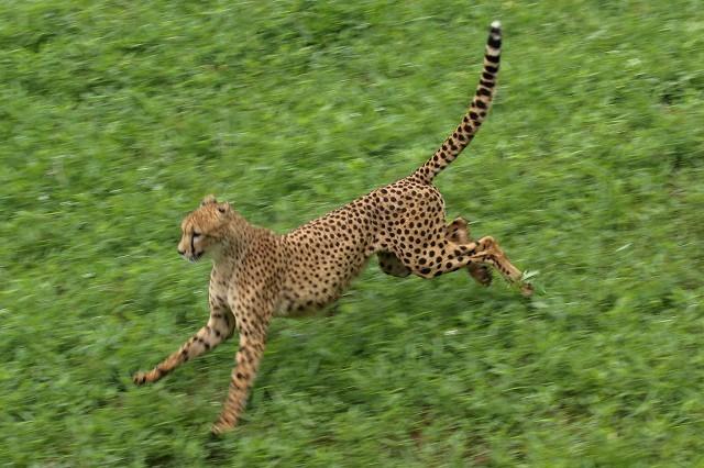 ネコ好きにはたまりません。五つ子たちの、RUN&JUMP_b0291402_05283285.jpg