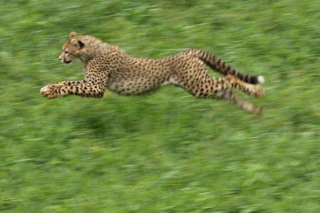 ネコ好きにはたまりません。五つ子たちの、RUN&JUMP_b0291402_05284954.jpg