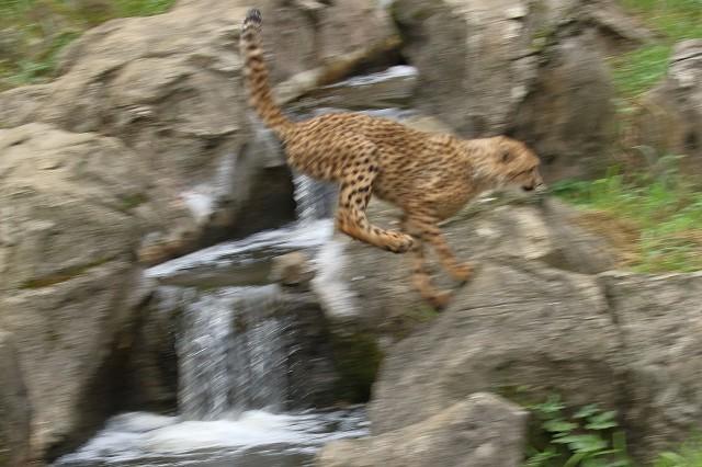 ネコ好きにはたまりません。五つ子たちの、RUN&JUMP_b0291402_05285356.jpg