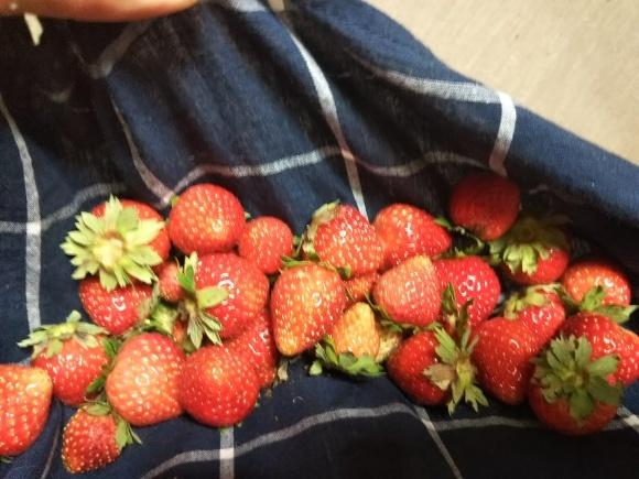 胡麻菓子 イチゴ、ちやたろうくん_f0316507_07102935.jpg