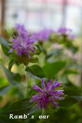 草花、紫陽花、向日葵♪_e0128909_08322127.jpg