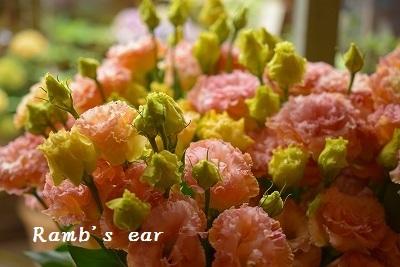 草花、紫陽花、向日葵♪_e0128909_08363667.jpg