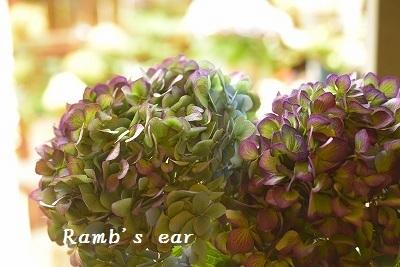草花、紫陽花、向日葵♪_e0128909_08365035.jpg