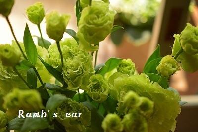 草花、紫陽花、向日葵♪_e0128909_08365773.jpg