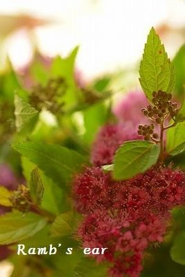 草花、紫陽花、向日葵♪_e0128909_08370413.jpg