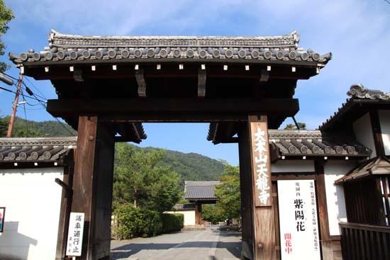 放生池でハスが咲いた 天龍寺_e0048413_22005598.jpg