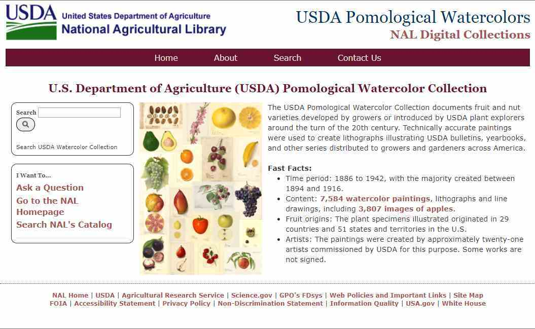 米国農務省の果物水彩画コレクションが公開されています_c0025115_22202998.jpg