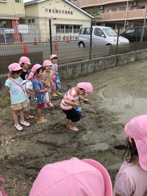 4・5歳児 ツバメとの出会い_b0117125_10500667.jpg