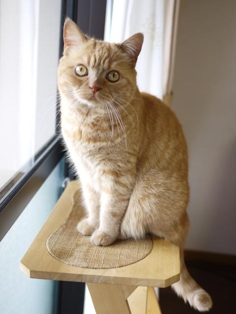 猫のお留守番 みかんちゃん編。_a0143140_21133603.jpg