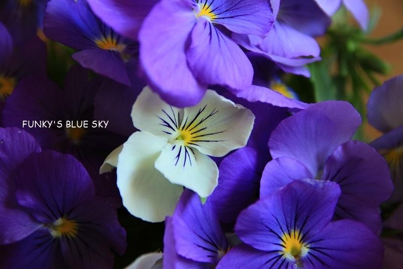 庭の小さなブーケ** (5月29日)_c0145250_10023090.jpg