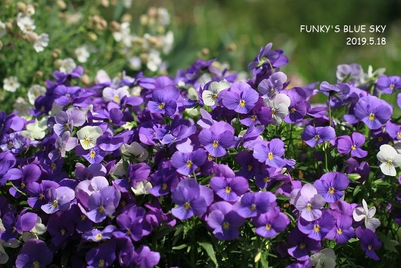 庭の小さなブーケ** (5月29日)_c0145250_10023361.jpg