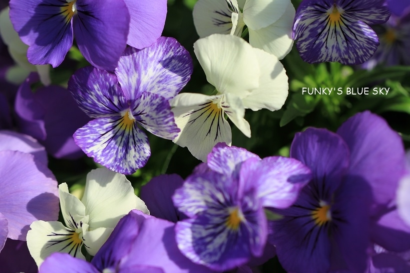 庭の小さなブーケ** (5月29日)_c0145250_10023537.jpg