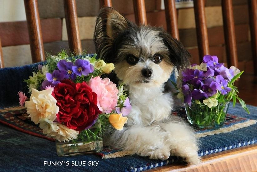 庭の小さなブーケ** (5月29日)_c0145250_10030060.jpg