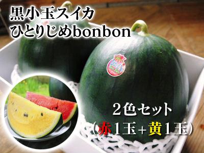 黒小玉スイカ「ひとりじめbonbon」黄色果肉は7月2日出荷分まで!赤果肉、メロンとのコンビも大人気!_a0254656_16315124.jpg