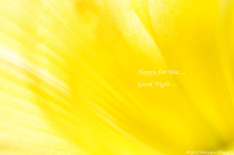 for You ..._a0333661_23114889.jpg