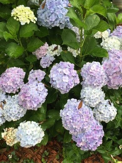 紫陽花色のリネンエプロンと軽やかショール_c0334574_16432542.jpg