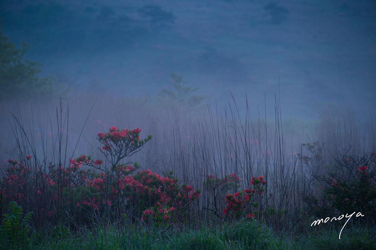 霧の中で_c0085877_05363637.jpg