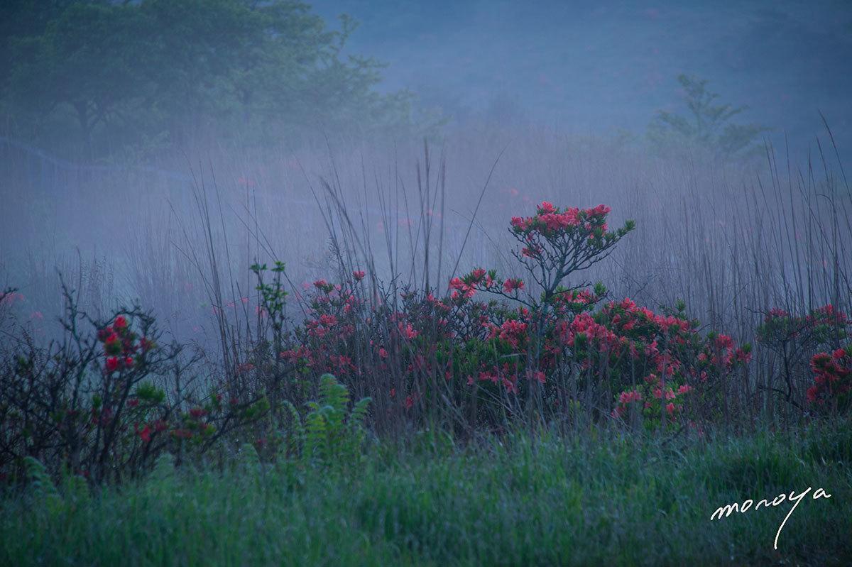 霧の中で_c0085877_05364437.jpg