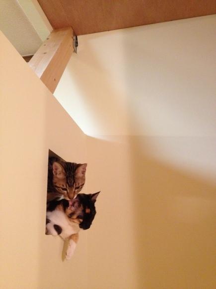 猫と暮す 家づくり _d0162179_15543400.jpg