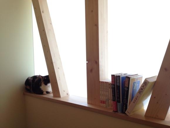 猫と暮す 家づくり _d0162179_15550872.jpg