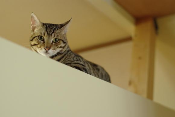 猫と暮す 家づくり _d0162179_15552497.jpg