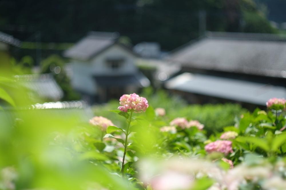 紫陽花山を歩いて・・2_d0021491_00142803.jpg