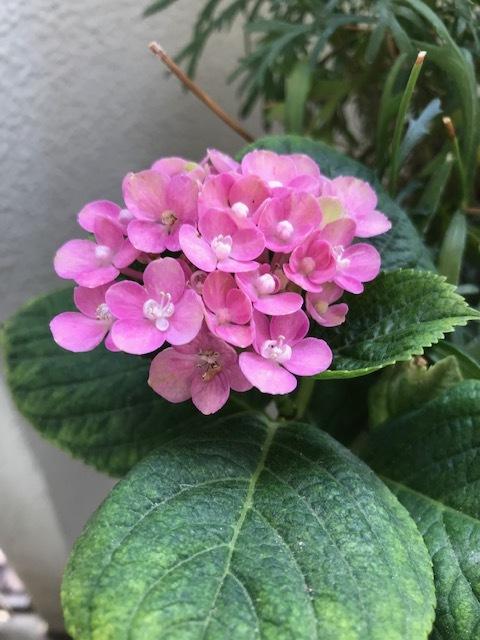 ベランダの花_f0204295_14303304.jpg