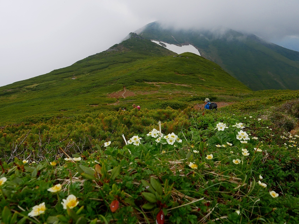 富良野岳、三峰山と上富良野岳、2019.6.24ー富良野岳から上富良野岳編ー_f0138096_21033463.jpg