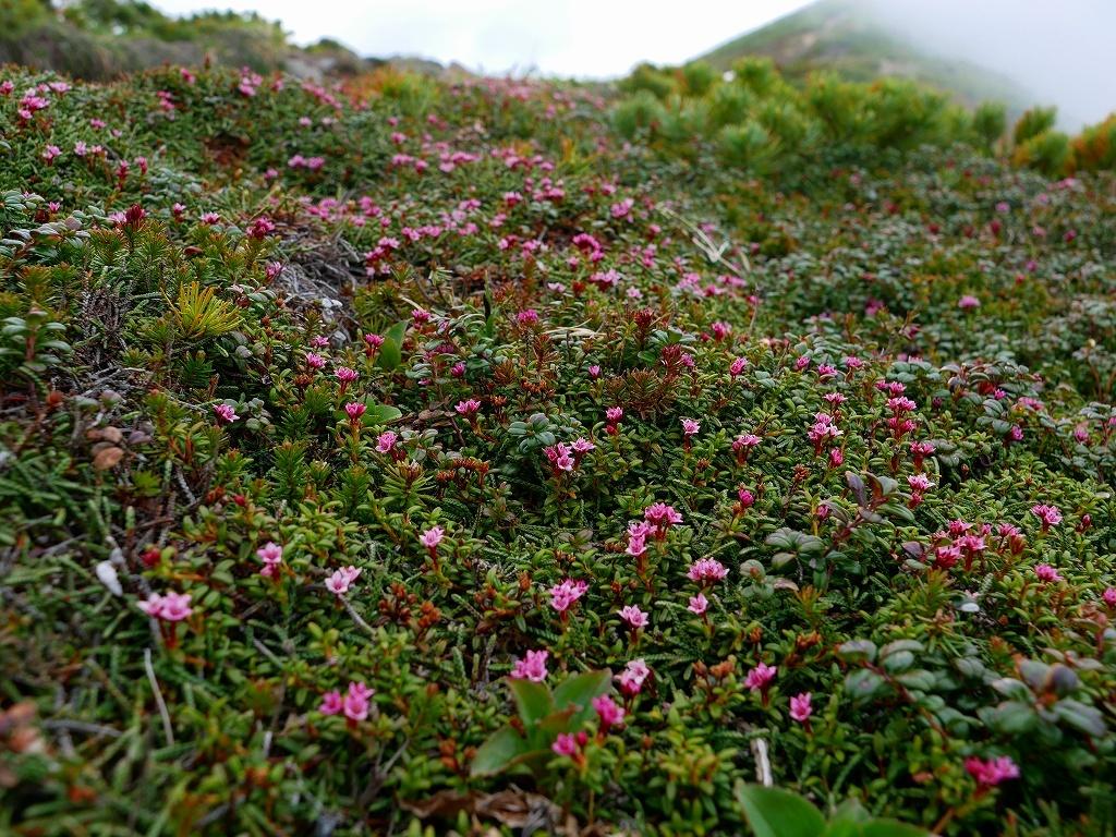 富良野岳、三峰山と上富良野岳、2019.6.24ー富良野岳から上富良野岳編ー_f0138096_21042536.jpg
