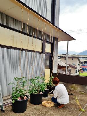 会館にミニ菜園が出来ました!_c0336902_20362120.jpg