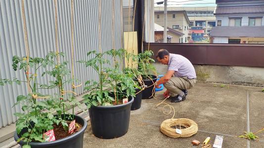 会館にミニ菜園が出来ました!_c0336902_20363094.jpg