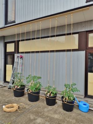 会館にミニ菜園が出来ました!_c0336902_20363376.jpg