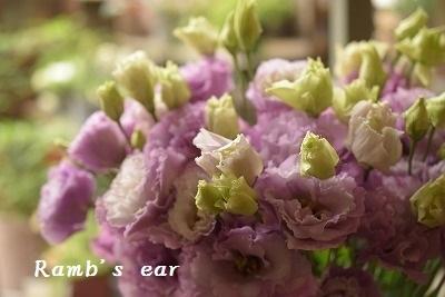 入荷したお花ご紹介♪_e0128909_13231505.jpg