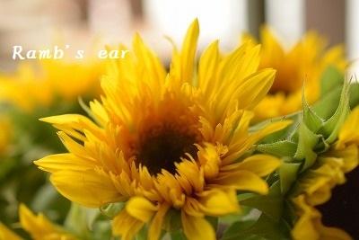 入荷したお花ご紹介♪_e0128909_13232961.jpg