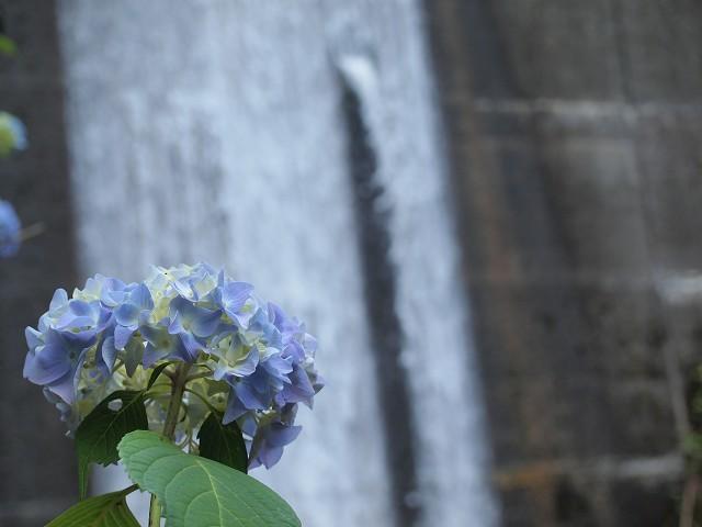 久米南町の花菖蒲園_d0295818_00484864.jpg